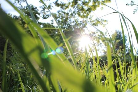 gräs klimat natur