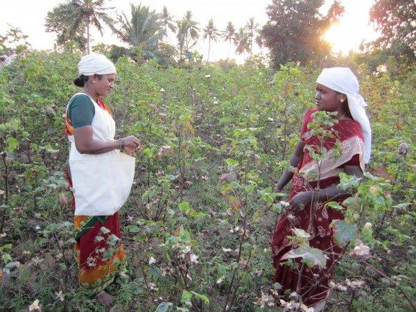 Bomullsodlare Fairtrade Tamil Nadu Indien. Foto Ida Svedlund