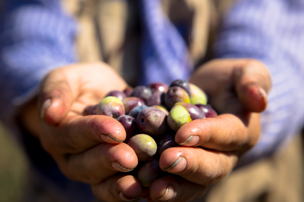 Skörda i fred – Peaceful Harvest